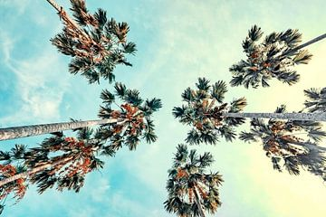 Palmiers sur Manjik Pictures