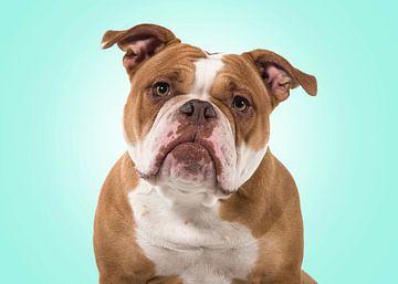 Old English bulldog portret von Elles Rijsdijk