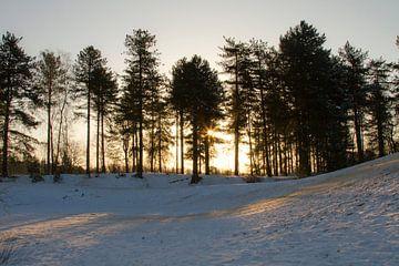 Die Bergse Heide im Schnee von Sabina Meerman