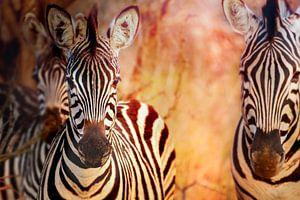 Zebras at sunset Manyeleti