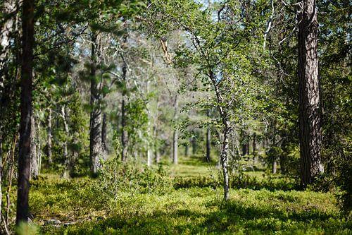 Doorkijkje Fins bos van