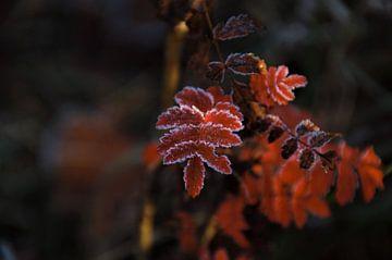 Het Rode Herfstblad von DoDiLa Foto's