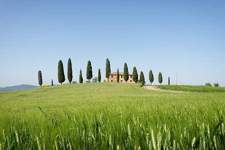Bauernhaus mit Zypressen in der Toskana