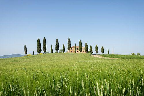 Landhuis met cipressen en graanveld in Toscane