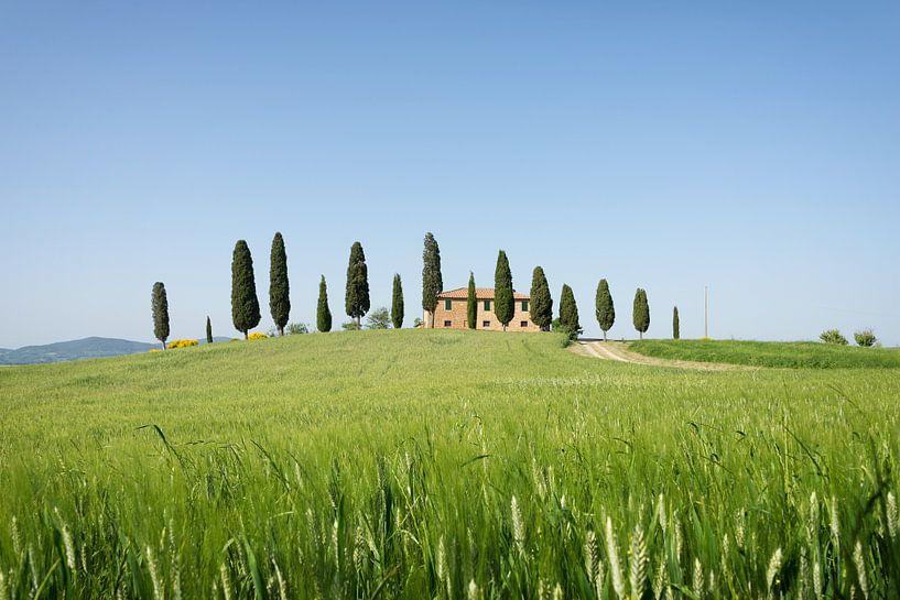 Landhuis met cipressen en graanveld in Toscane van iPics Photography