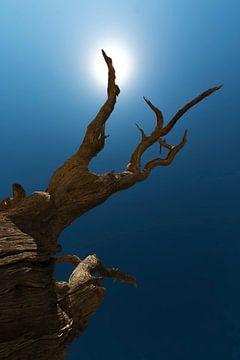 Zwartgeblakerde boom onder de hete Afrikaanse zon van Bas Ronteltap