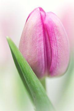 I'm in de mood.... (bloem, tulp) sur