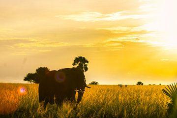 Afrikanischer Elefant und Sonnenuntergang. von linda ter Braak
