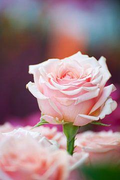Boeket roze rozen van Ivonne Wierink