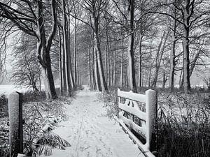 Hek en bospad in de sneeuw, Chateau Marquette