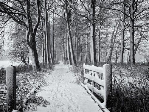 Hek en bospad in de sneeuw, Chateau Marquette van