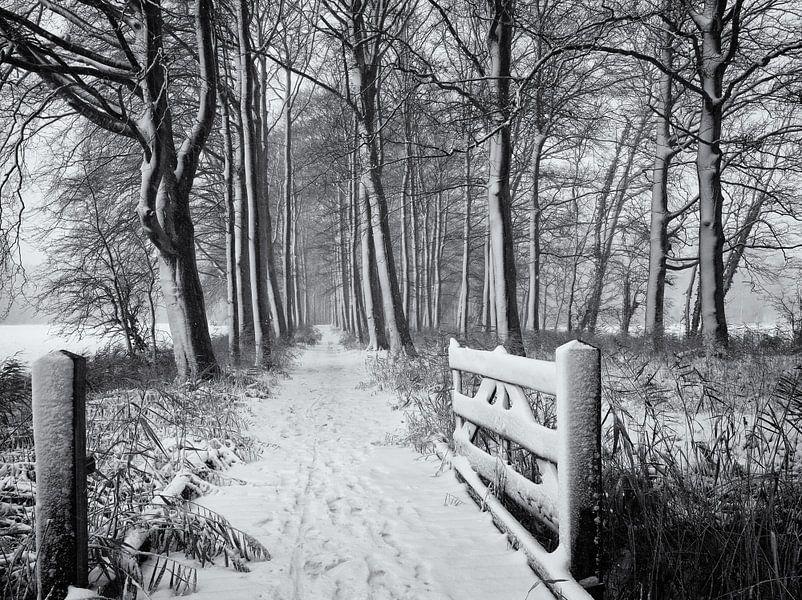 Hek en bospad in de sneeuw, Chateau Marquette van Paul Beentjes