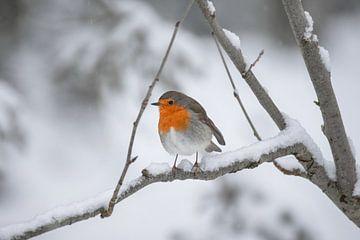 Roodborstje in de sneeuw van Kim de Been