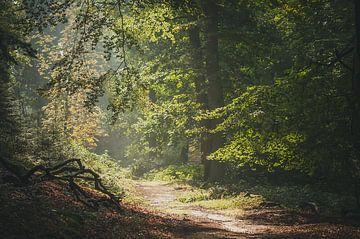 Ochtendnevel bos van Nancy van Verseveld