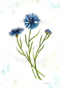 Korenbloemen van Sandra Steinke