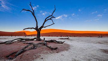 Versteende boom in Dodevlei / Deadvlei nabij de Sossusvlei, Namibië von Martijn Smeets