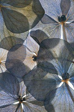 Botanischer # 26, Lenka von 1x
