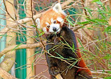 Little red panda van Leopold Brix