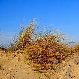Winterdünen von Ostsee Bilder