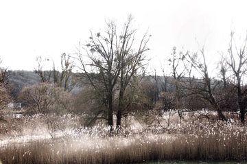 Plaine inondable sur Christine Nöhmeier