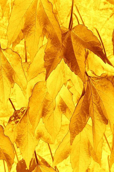 Golden Leaves van Ernst van Voorst