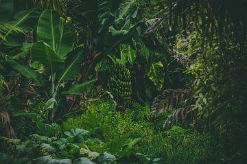 Dschungel in Europa, Azoren von Isai Meekers