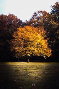 Boom bevangen door de herfstkleuren von