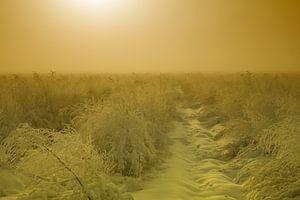 Asperges onder een laag sneeuw van