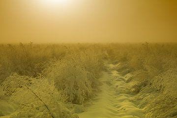 Asperges onder een laag sneeuw von Olaf Eckhardt