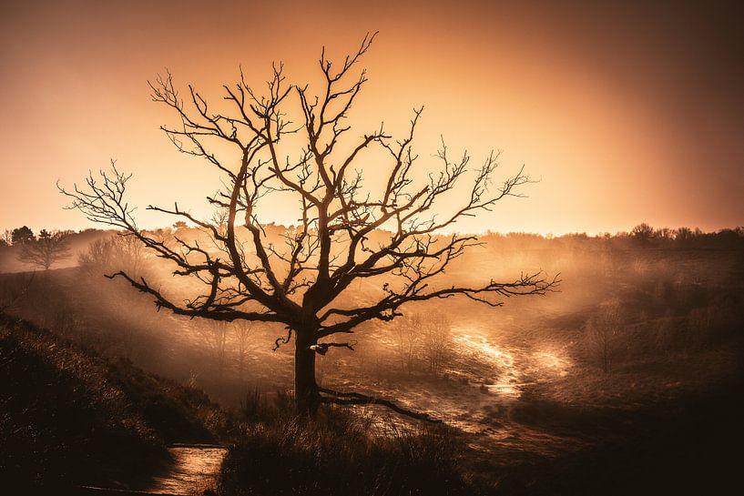 Lonely Tree at sunset van Joost Lagerweij