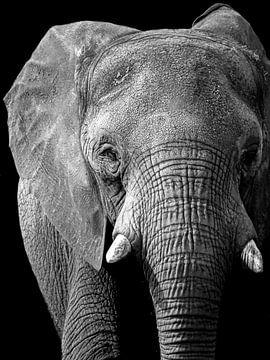 Elefant schwarz/weiß von Liv Jongman