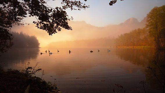 Schwanen lake van Silvio Schoisswohl