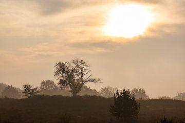 boom op de zonnige Veluwe van Tania Perneel