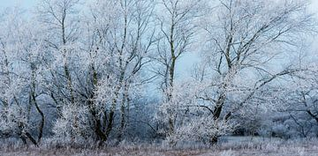 Winterlandschap van Caroline de Brouwer