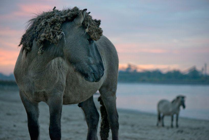Konikpaarden aan de rivier de Waal, Ooijpolder van Remke Spijkers