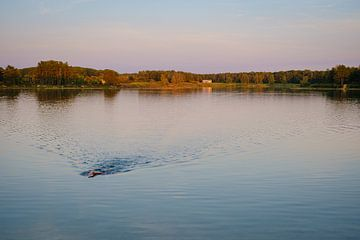 Zwemmer bij zonsondergang van Johan Vanbockryck