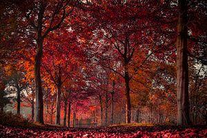 Vandaag is rood .......... ook in de herfst kleurt het bos rood !