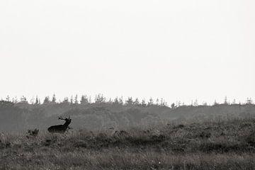 Edelhert in het veld von Bob Wieggers