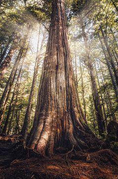 De reuzen uit het oerbos van Joris Pannemans - Loris Photography