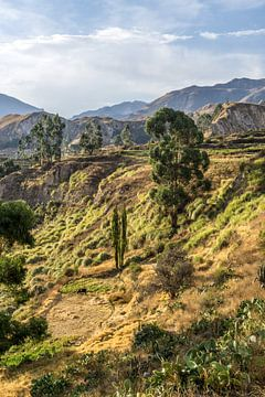 Colca Canyon van Joost Potma