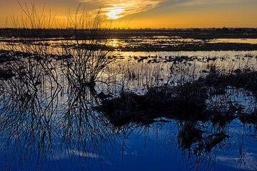 Laagland van Hammen bij zonsondergang van Katrin May