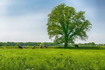 Prachtige boom in de weide van Mark Bolijn