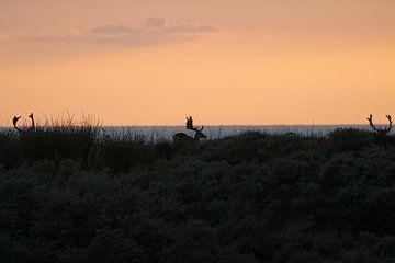 Damherten bij zonsondergang voor de kust van Anne Zwagers