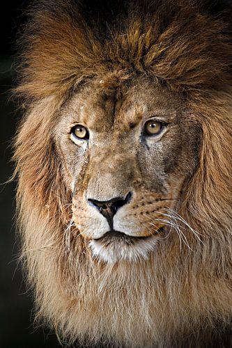 leeuw sur Paul Jespers