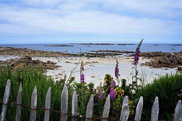 Prachtig wit strand met bloemen en houten hek van Sandra van der Burg
