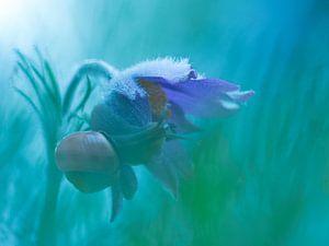 Slak en bloem