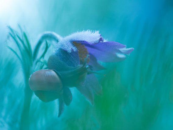 Slak en bloem van bird bee flower and tree