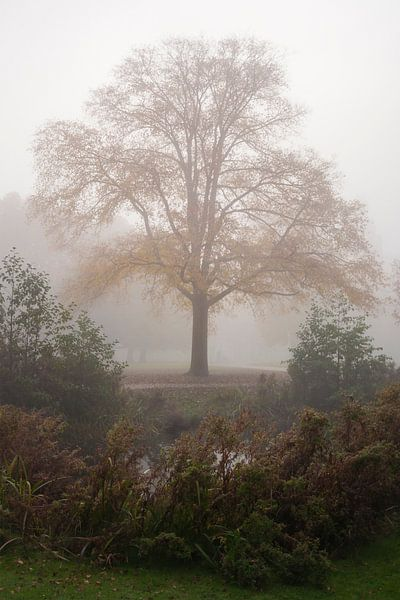 Mist van Pieter van Roijen