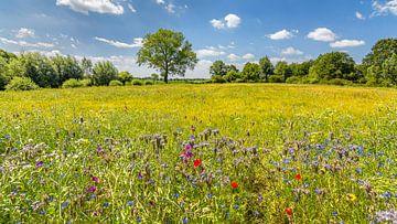 Sommerlandschaft mit wilden Blumen 2 von Kok and Kok
