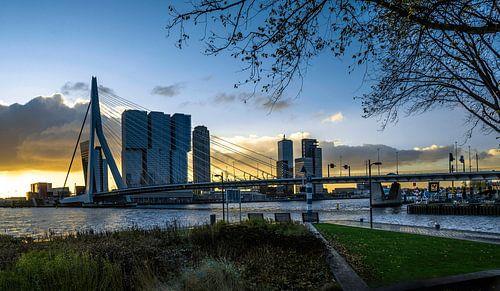 Skyline van Rotterdam vanaf Leuvehoofdpark